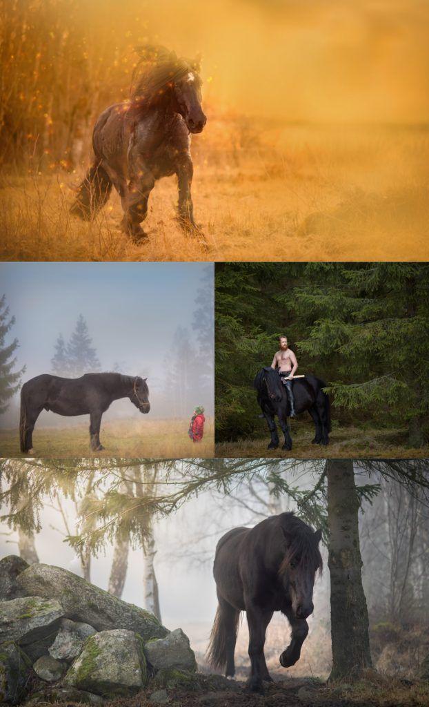 Hästfoto med fotograf Maria Lindberg. Horse photography by Swedish photographer Maria Lindberg