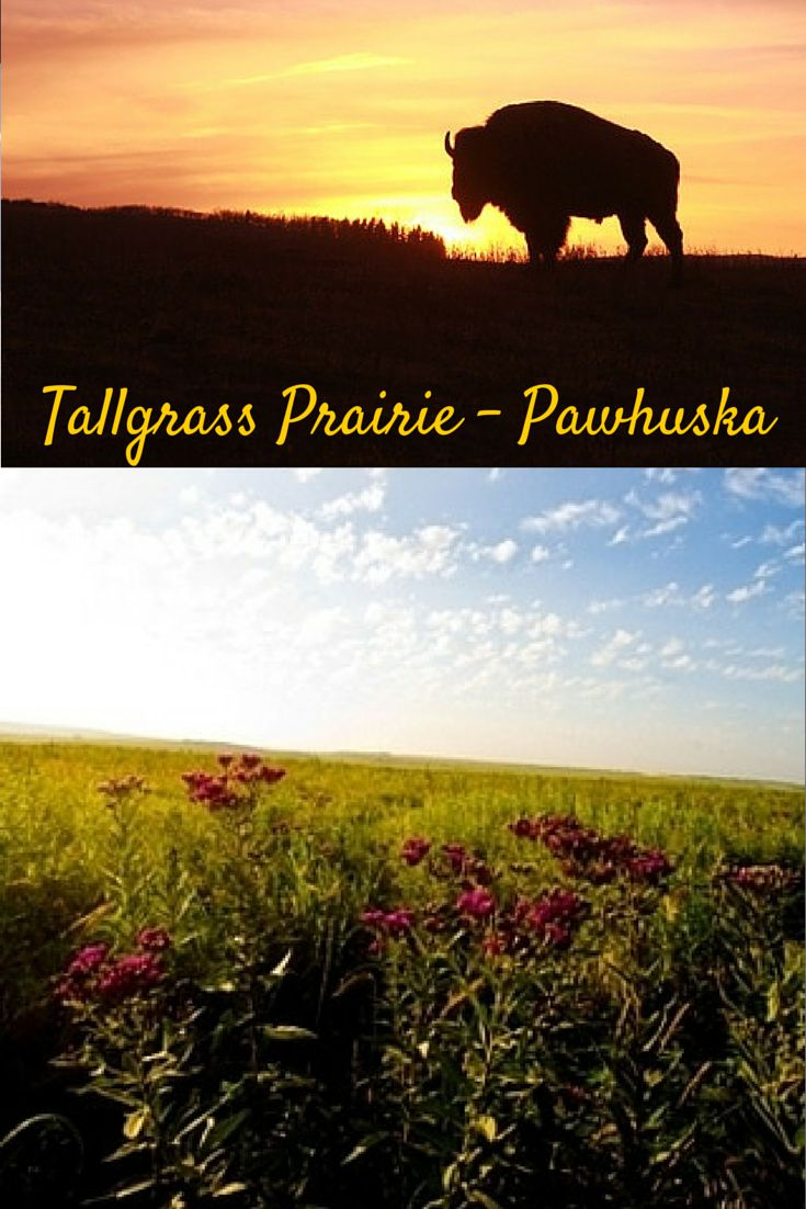 Come explore the largest protected Tallgrass Prairie on Earth at the Tallgradd Prairie in Pawhuska!