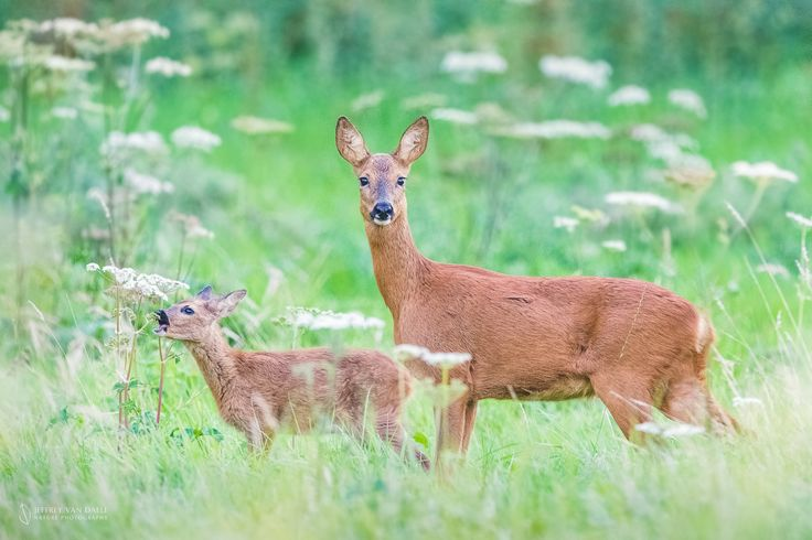 Mother and child by Jeffrey Van Daele on 500px