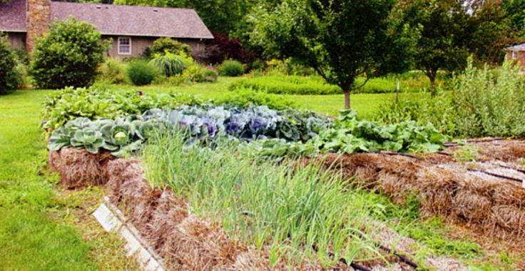 Få en ukrudtsfri køkkenhave ved at dyrke i halmballer - Drivhusklubben.dk