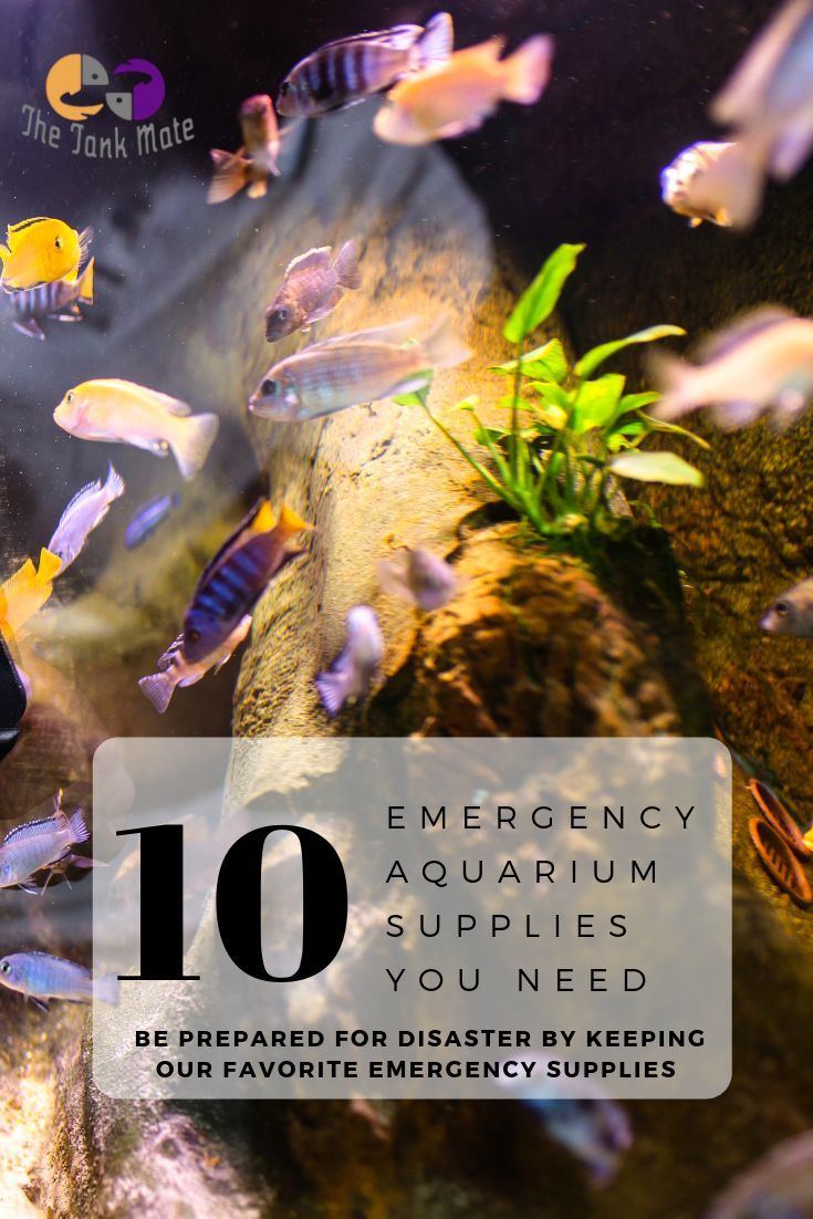 Emergency Fish Supplies List 10 Items For Your Aquarium To Always Keep On Hand We Dig Into All Of The Item Fish Supplies Fish Tank Supplies Aquarium Supplies