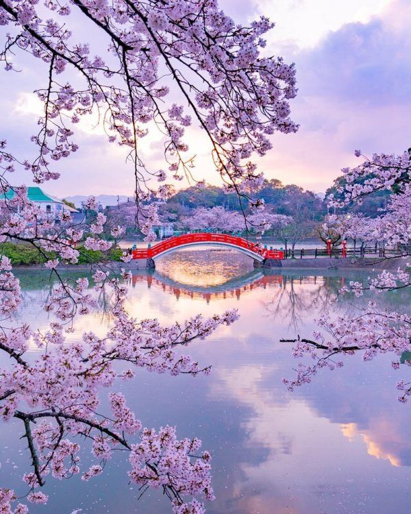 Cherry Blossoms And Nemophila Flowers Are Blooming In Japan Cutesypooh Japanese Landscape Nature Photography Beautiful Landscapes