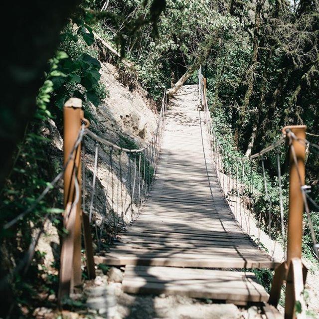 #тисосамшитоваяроща #лес #лето #мост #мостик #канатныймост #солнце #тень #свет #сочи #хоста #sochi #jdanovaru #лес #природа #nature #light #shadow #forest #sun #photo #sochi #natgeoru