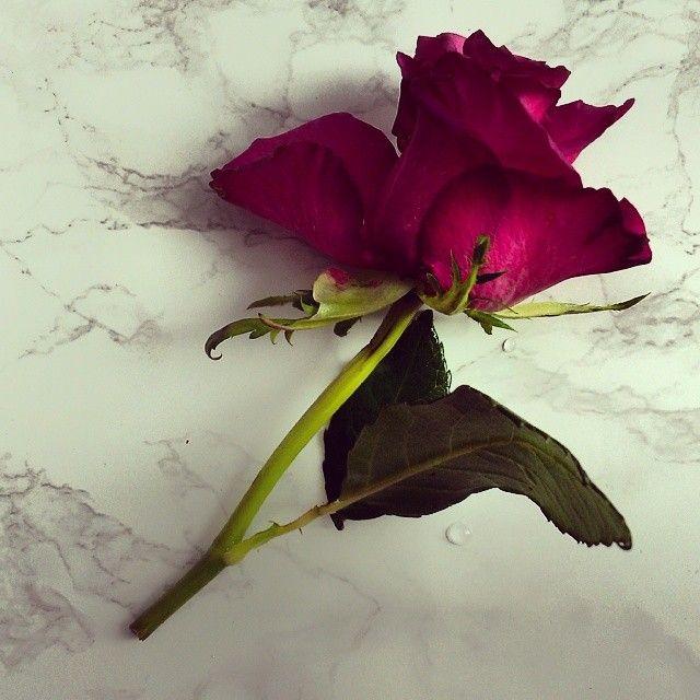 Wodna kąpiel zdecydowanie pomogła :) #roses #flowers