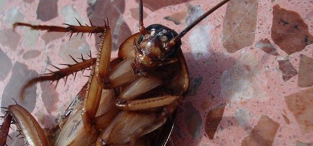 Elimina las Cucarachas con Control de Plagas en Barcelona - http://www.embajada-hungria.org/elimina-las-cucarachas-con-control-de-plagas-en-barcelona/