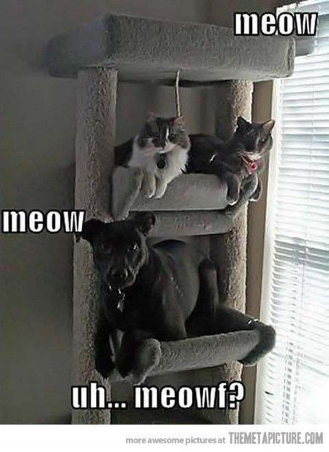 uploadfunny.com funny animals pictures with captions (54 pict) | Funny Pictures #compartirvideos #funnypictures