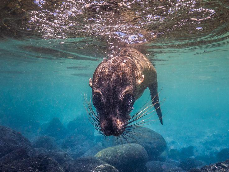 Tips voor spetterende onderwaterfoto's | Cursussen | Zoom.nl