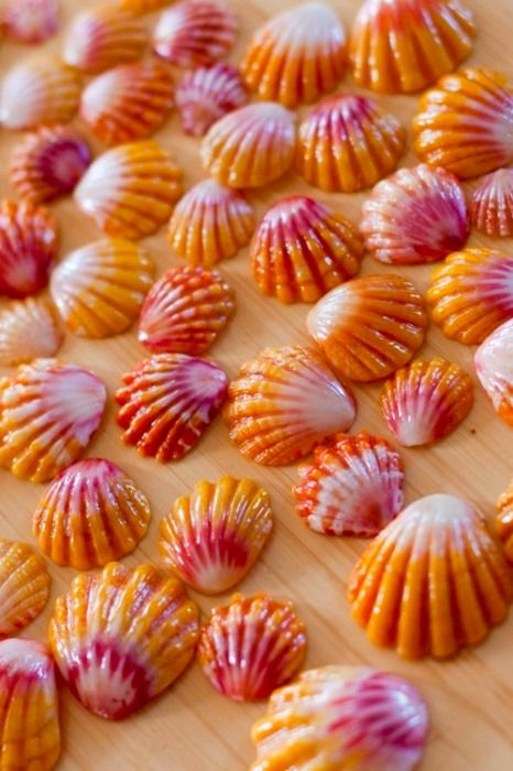 Hawaiian Sunrise Shells