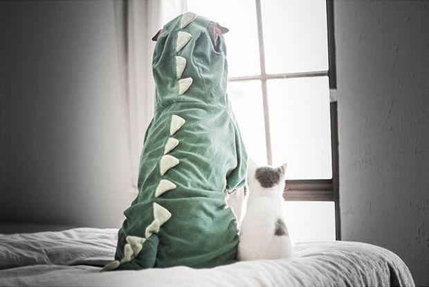 Σαν το σκύλο με τη γάτα: Οι καλύτεροι φίλοι - Living | Ladylike.gr