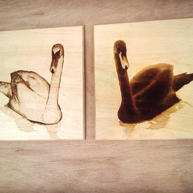 A cheeky photo of the finished swans. These have been #lacquered and give the wood a warm finish #laserengraving #plywood #swan #blackswan #jensheehan