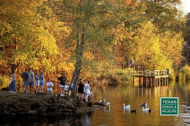 Tyler State Park in east Texas is known for its beautiful forests and tranquil lake. Canoe, kayak and paddle boat rentals available.