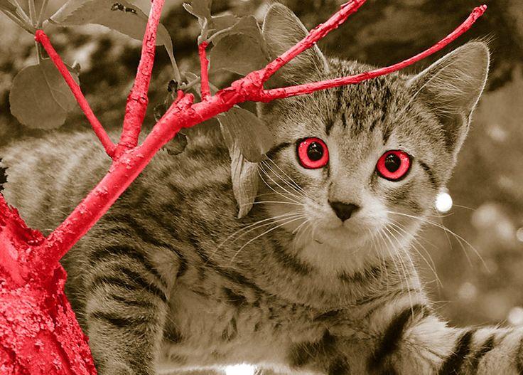WallArt - Tree Cat - Presentorium