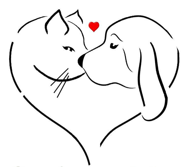 #yulin #cats #dogs #animalawareness