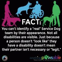 Here are the top 10 things Service Dog handlers want you to know about their canine partner, the law, access rights, and Service Dog etiquette.