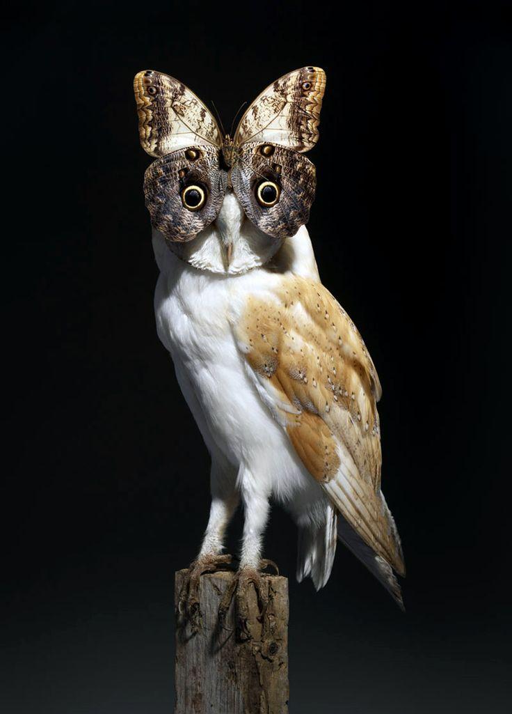 Nancy Fouts - Paradoxical Juxtaposition: Butterfly Owl (2012)    (Source: likeafieldmouse, via dallasdingman)