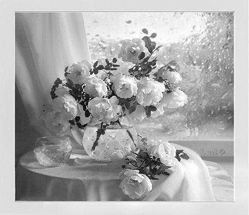 Белые пионы анимационные картинки Цветы красивые