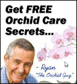 Orchid Care | The Most Important Things You Need To Know About Orchid Care Today!