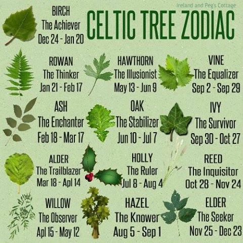 The Celtic Zodiac is based on the cycles of the moon. The year is divided into 13 lunar months with a tree assigned to each month. The Druids believed that ...