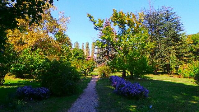 Autumn scenery in Bucharest Botanical Garden