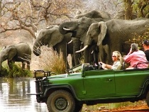 Wildlife Safaris - We did a 2 night/3 day tour of Kruger with Hoppy (who was fantastic) and it was wonderful!  We saw so many amazing things and learned so much!