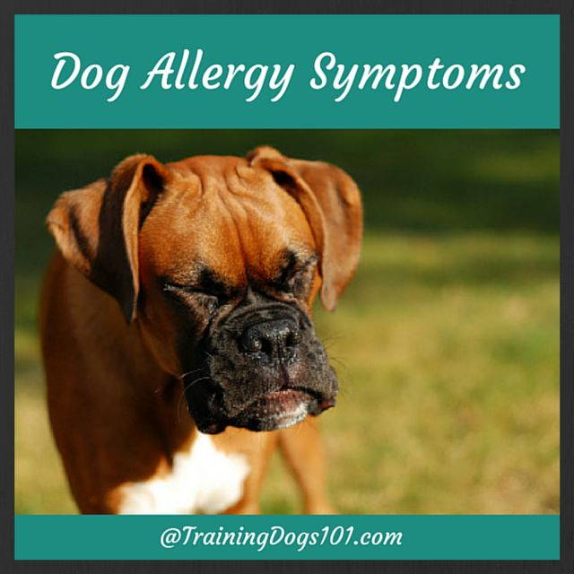Dog Allergy Symptoms