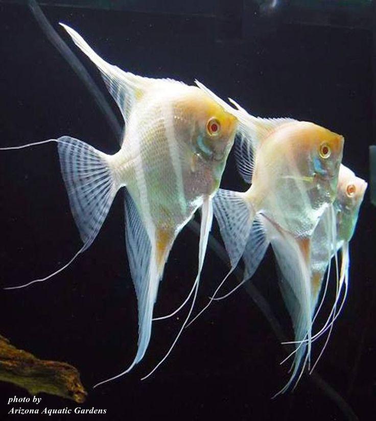 Les 25 Meilleures Images Du Tableau Orinoco Aqua Sur