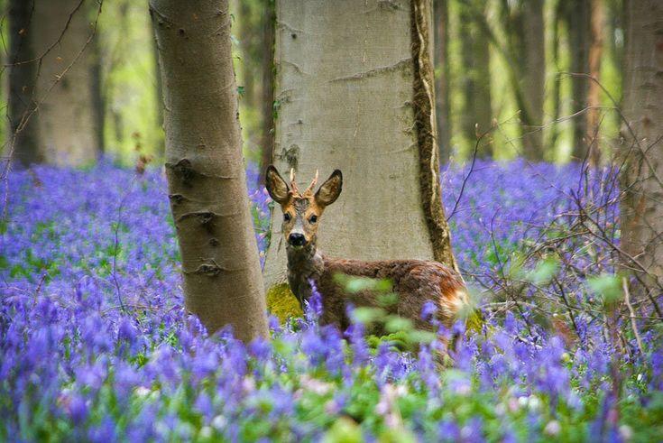Nádhera! Les, v ktorom rastú iba modré kvety