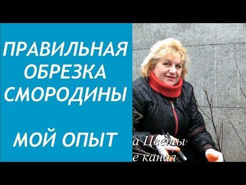 Правильная ОБРЕЗКА СМОРОДИНЫ. МОЙ ОПЫТ - YouTube