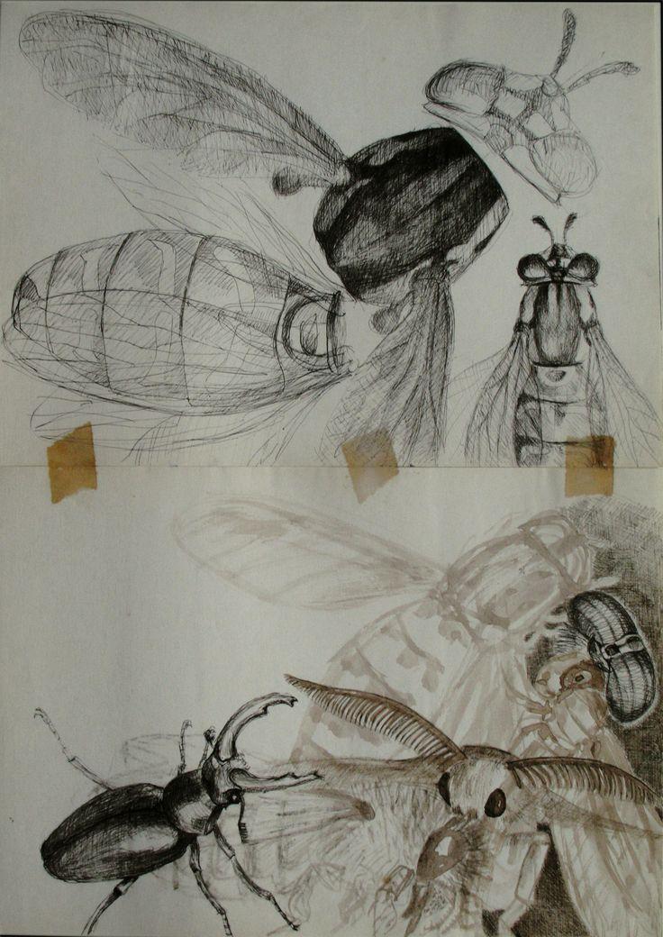 studiu insecte