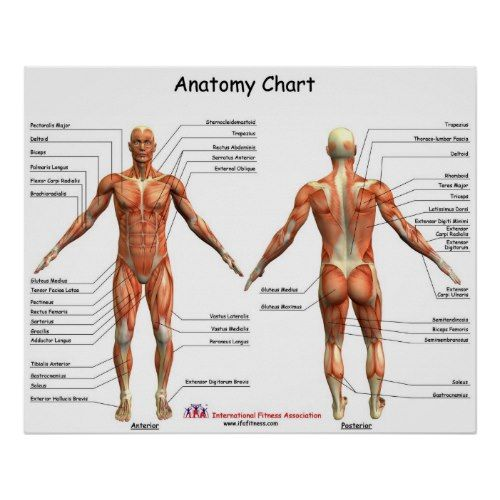 27 best images about anatomy on Pinterest | The skulls, Human ...