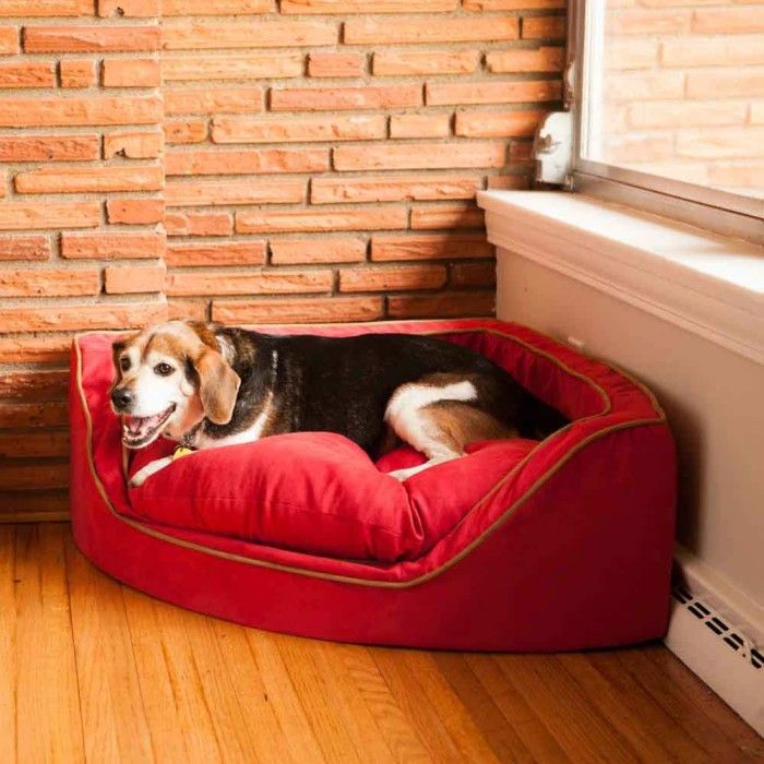 25 best ideas about heated dog bed on pinterest dog in. Black Bedroom Furniture Sets. Home Design Ideas