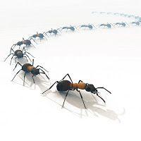 Come allontanare le formiche da casa con rimedi naturali, senza insetticida