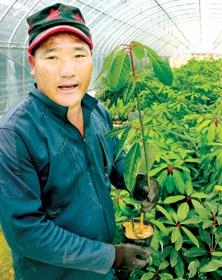"""""""10년 이상 장기적 관점서 바라보면 어느 농산물보다 나무 경쟁력 높아"""""""
