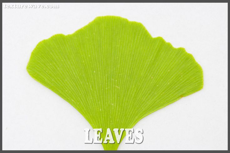 11 new green leaves textures uploaded texturewave.com