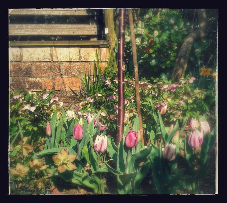 Tiptoe through the tulips.