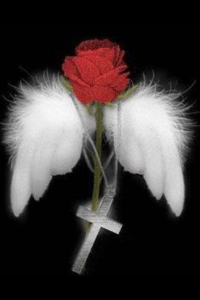 Картинки красивые живые розы я тебя люблю ангел