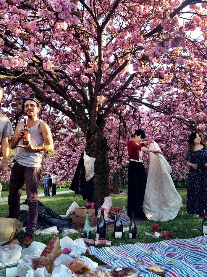 Best picnic spot in Paris- Hanami Paris