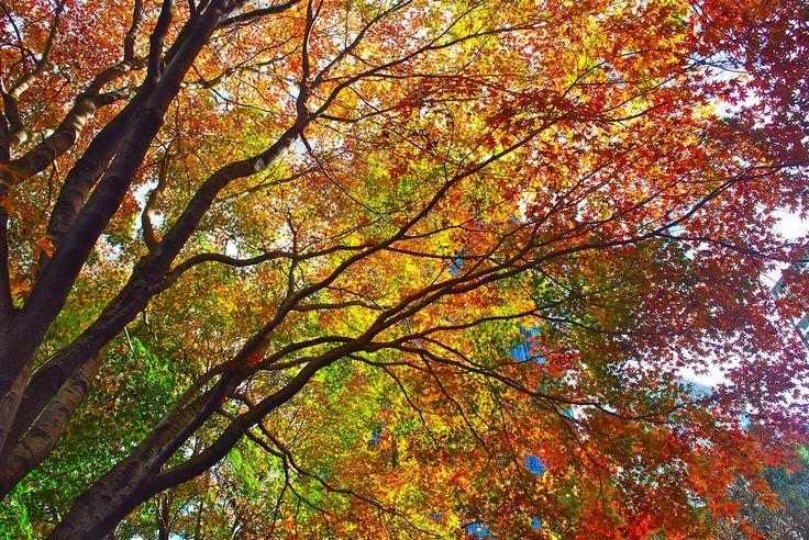 Autumn | by littlekiss☆
