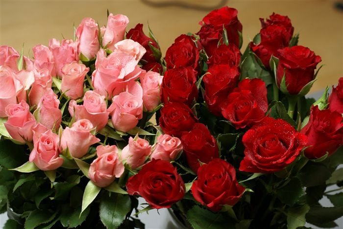 mini-pink-and.red-roses-dsc01619_high.jpg (700×468)