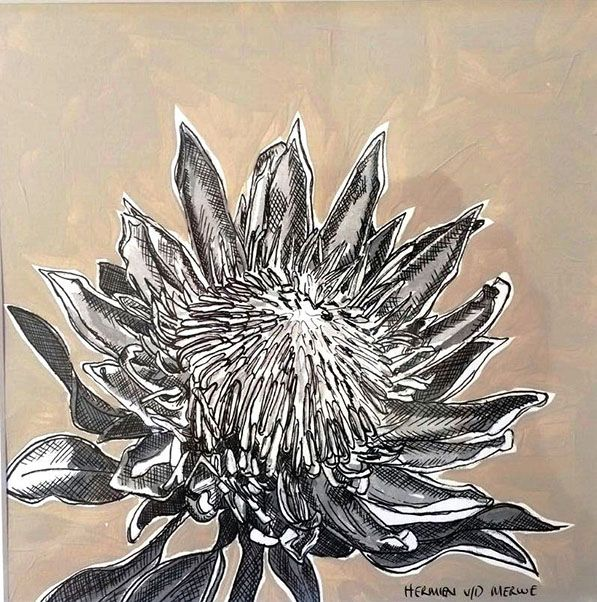 Title: Fynbos:  Table Mountain Fynbos 11 Medium: Pen-and-Ink drawing on paper with oil paint background Size: 200 x 200mm