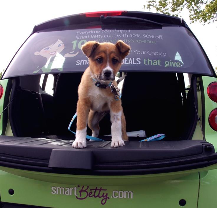 At the Calgary Humane Society's Annual Dog Job... we picked up a passenger.