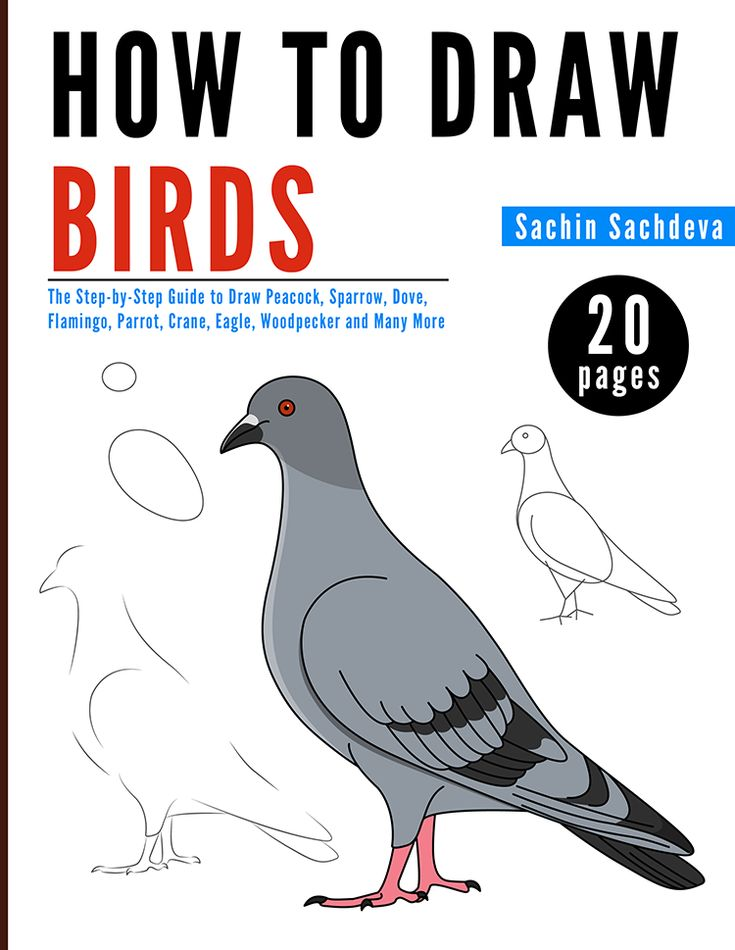 HOW TO DRAW BIRDS (Full Colored Book) is a step-by-step guide, easy to use drawing book which shows how simple it is to draw your favorite Peacock, Sparrow, Dove, Flamingo, Parrot, Crane etc