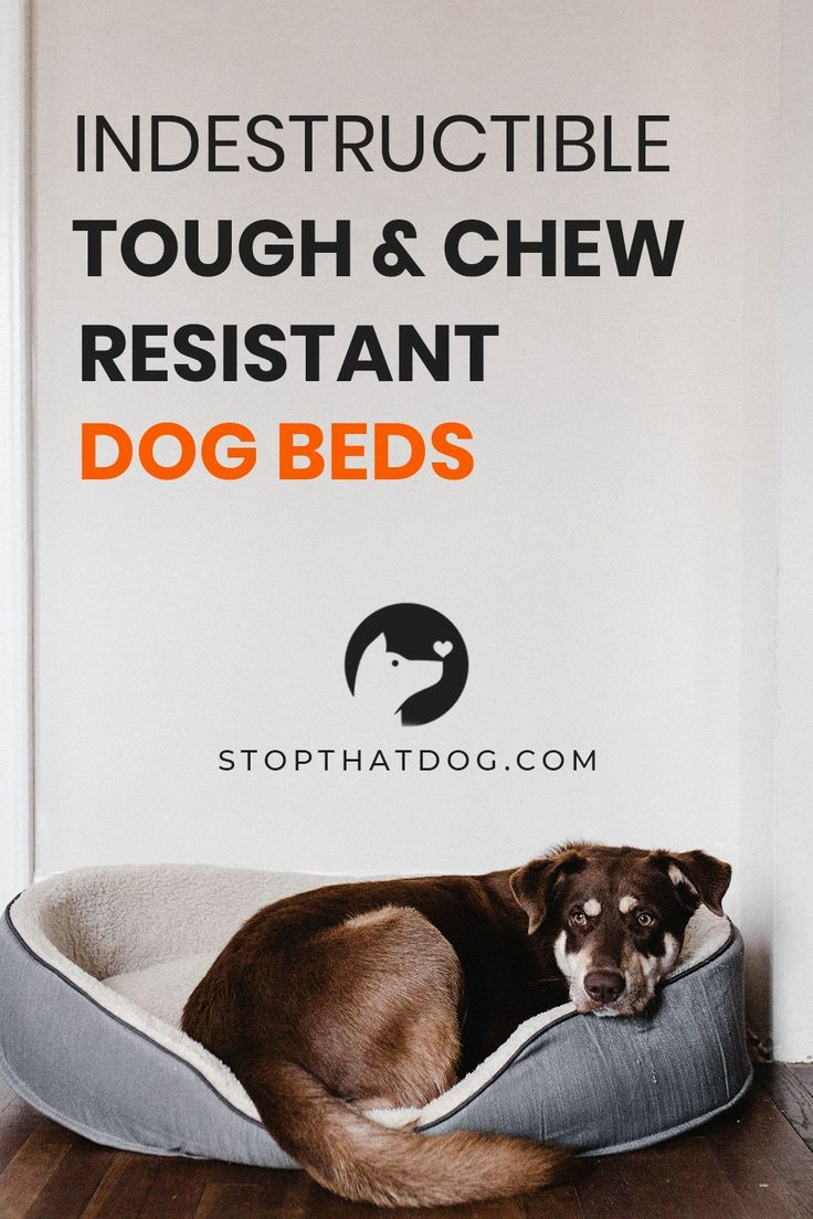 Looking for tough, chewresistant, and indestructible dog