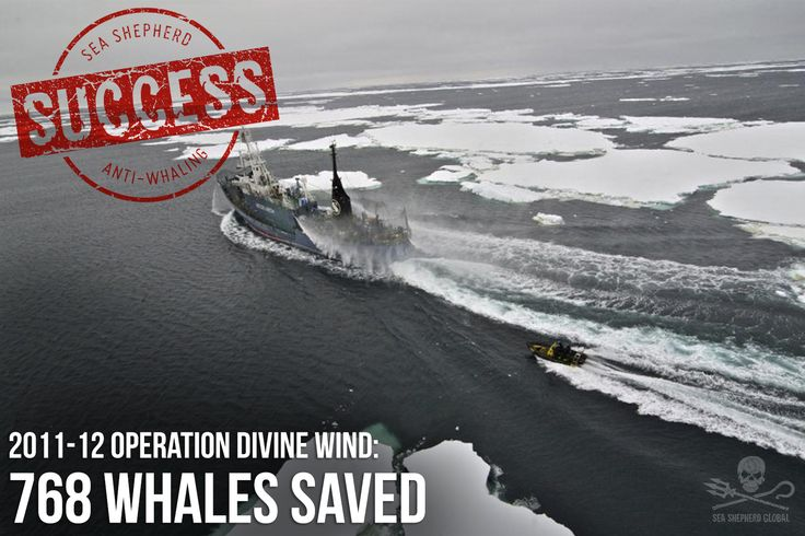 During our 2011-12 whale defense campaign in the Southern Ocean we prevented Japanese whale poachers from slaughtering 768 whales in the Australian Whale Sanctuary. This year our ships will be heading back to the icy waters of Antarctica to uphold international law but we need your help! Please support our mission. Find out more and DONATE now: seashepherdglobal.org/nemesis