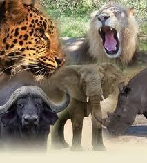 The Big Five, Kruger National Park