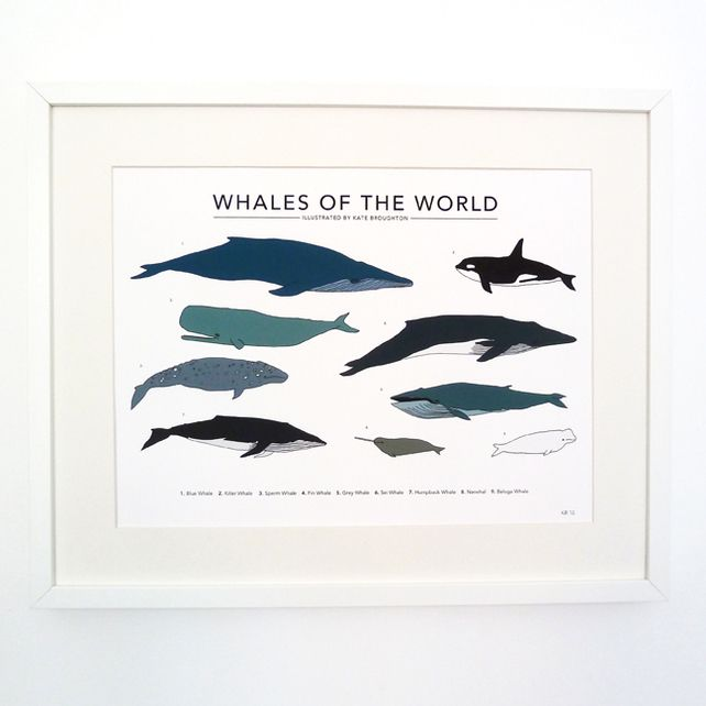 """Whales of the World print - large (13"""" x 19"""") £35.00"""