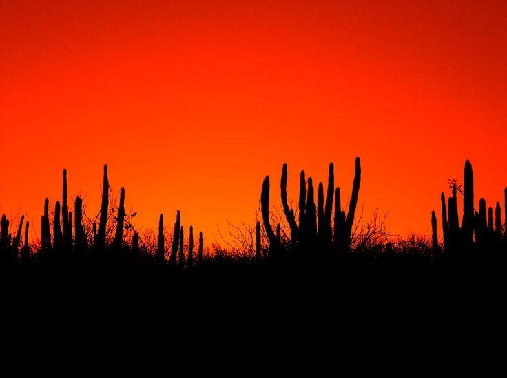 """Sonora querida, tierra consentida...""  sonora, Mexico"