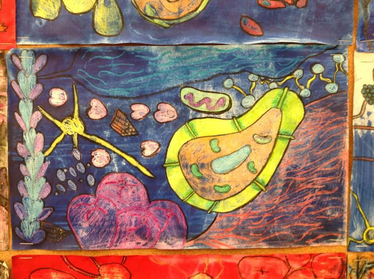 17 Best Images About 5th Grade Animal And Plant Cell