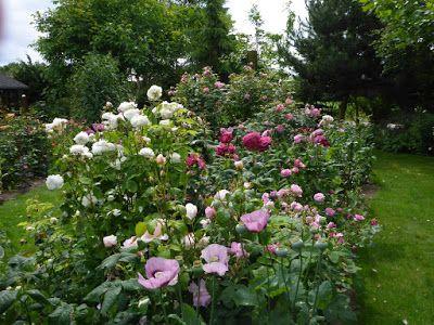 Høneballehaven: Liljer, dagliljer og roser