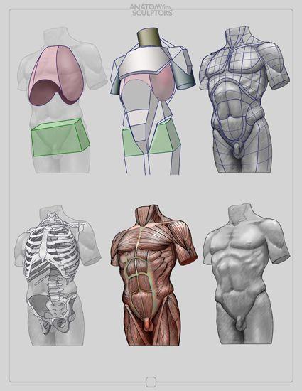 Anatomy for Sculptors by anatomy4sculptors.deviantart.com on @deviantART